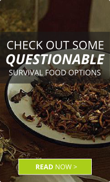 survival-food-insects.png